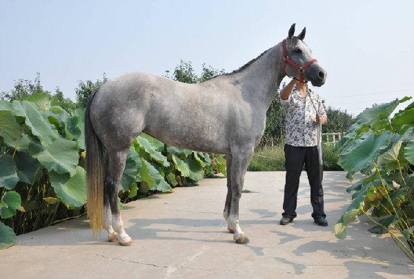 壁纸 动物 马 骑马 600_404